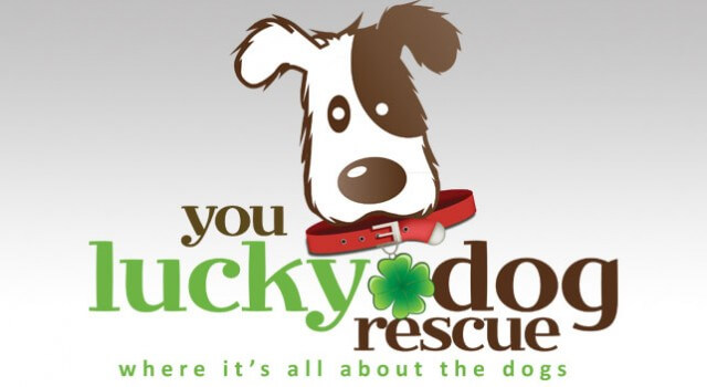 You Lucky Dog Rescue logo